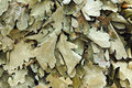 Dried Leaves Broom Royalty Free Stock Photography - 38869077