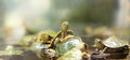 Baby Turtles Royalty Free Stock Photography - 38878697