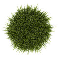 Top View Of Decorative Grass Isolated On White Royalty Free Stock Photo - 38902535