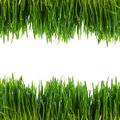 Green Grass Isolated On White Background Royalty Free Stock Photography - 38902937