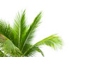 Leaves Of Palm Tree Isolated On White Background Stock Image - 38915621