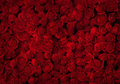 Red Roses Stock Images - 38920274