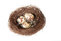 Bird S Nest With Eggs Royalty Free Stock Photography - 38940727