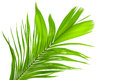 Leaves Of Palm Tree Isolated On White Background Stock Photos - 38969813