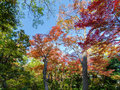 Colorful Maple Leaf Background In Autumn Stock Photos - 38972573
