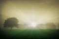Sun Shining Over Meadow With Tree And Fog Stock Photo - 38991670