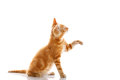 Red Little Cat Stock Images - 39043414