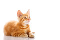 Red Little Cat Stock Photography - 39043462