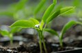 Young Plants Stock Photography - 39043592