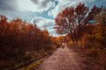 Pathway In The Autumn  Forest Stock Image - 39076301