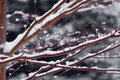 Snow Covered Branches Royalty Free Stock Photos - 3912078