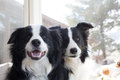 Two Dogs Sitting Royalty Free Stock Photo - 39109105