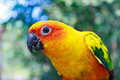 Beautiful Colorful Parrot Stock Image - 39117131