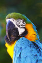 A Portrait Of A Beautiful Parrot Royalty Free Stock Image - 39124796