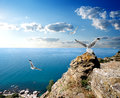 Seagulls And The Sea Stock Images - 39142044