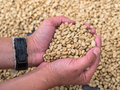 Holding Seeds Royalty Free Stock Image - 39174496