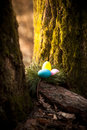 Photo Of Colored Eggs Hidden Under Tree At Forest Royalty Free Stock Photo - 39186855