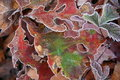 Frost Leaves Stock Photos - 3938263