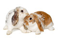 Two Rabbits Isolated On A White Background Stock Photos - 39302363