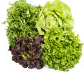 Lettuce (Lactuca Sativa L.) Several Types. Royalty Free Stock Photo - 39339915