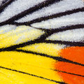 Butterfly Wing Texture Stock Photography - 39350312