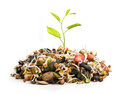 New Plant From Pile Of Different Seeds Growing Royalty Free Stock Photo - 39394225