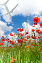 Plane Over Red Poppy Flowers Royalty Free Stock Photo - 39406985