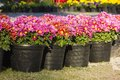 Potted Flower Royalty Free Stock Images - 39421409