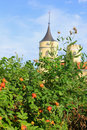 Shrub Roses And Old Castle Stock Images - 39467714
