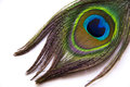 Peacock Feather Stock Image - 39477901