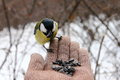 Tit On My Hand Royalty Free Stock Photos - 39553848