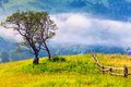 Lonely Tree In The Misty Morning Stock Photography - 39576832