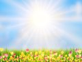 Spring Easter Background. EPS 10 Royalty Free Stock Photos - 39578368