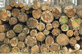 Woodpile With Damage Royalty Free Stock Images - 39607329