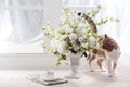 Sunlight Flower And Cat Stock Images - 39610814