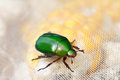 Emerald Scarab Royalty Free Stock Image - 39645936
