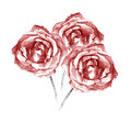 Beautiful Three Red Roses Bouquet Charcoal Artistic Drawing Stock Photo - 39656190