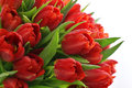 Fresh Red Tulips With Water Drops Stock Photo - 39660440