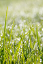 Closeup Of Green Grass With Soft Bokeh Background Royalty Free Stock Images - 39668369