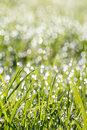 Closeup Of Green Grass With Soft Bokeh Background Royalty Free Stock Photos - 39668408