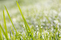 Closeup Of Green Grass With Soft Bokeh Background Stock Photo - 39668410