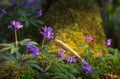 Spring Flowers In The Forest Stock Photo - 39671540