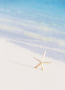 Cute Little White Sea Star Royalty Free Stock Image - 39673456