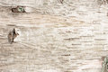 Birch Bark Natural Texture Background Royalty Free Stock Photo - 39710925