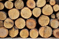 Stack Of Firewood Royalty Free Stock Images - 39731039