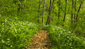 Vibrant Green Foliage In The Forest In Spring Stock Photos - 39761253