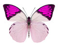 Beautiful Butterfly Isolated On White Stock Photography - 39768432