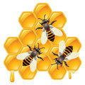 Vector Working Bees On Honeycells Royalty Free Stock Images - 39795709
