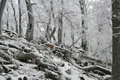 Forest In Icing Royalty Free Stock Image - 3986146