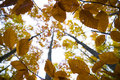 Fall Leaves Stock Image - 3989781